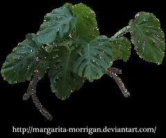 Monstera by margarita-morrigan