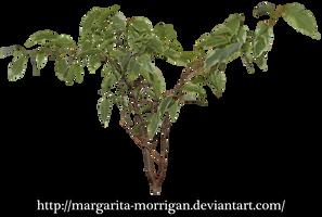 plant branch by margarita-morrigan