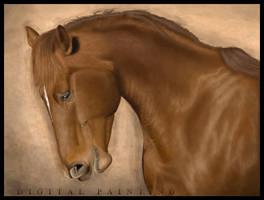 Horse by BaukjeSpirit