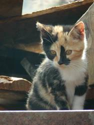 Kitten by zshowtimez