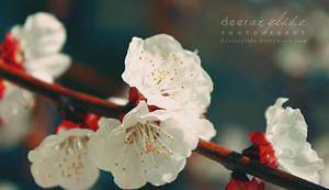 Spring Waltz by deerArylide