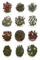 Northern herbs - watercolor by JuliaTar