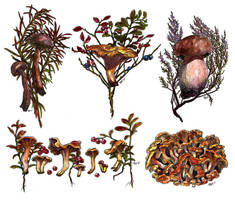 Mushrooms watercolor by JuliaTar