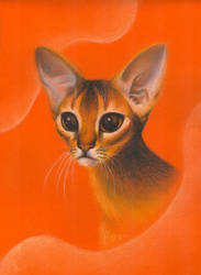 Abissinian Cat by tushkanchic
