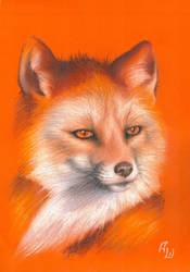 Fox by tushkanchic