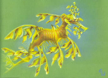 Phycodurus eques by tushkanchic