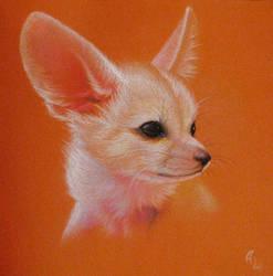 Fennec Fox by tushkanchic