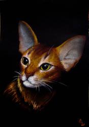 Abissinian Cat 2 by tushkanchic