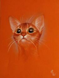 Abissinian Cat 3 by tushkanchic