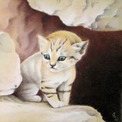 Felis Margarita Kitten by tushkanchic
