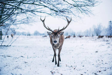 Deer friend. by kittysyellowjacket