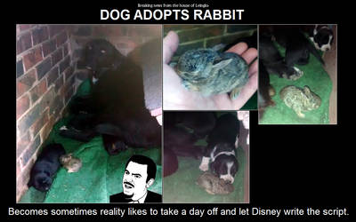 Dog Adopts Rabbit by leinglo