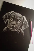 Puppy - Scratchboard by Cordilia61