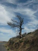 Burnt beauty by Earthmagic