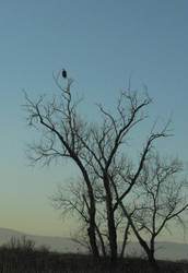 Far Away Eagle by Earthmagic
