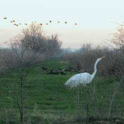 Great Egret and others by Earthmagic
