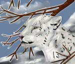 Snow Leopard by mikiayla97