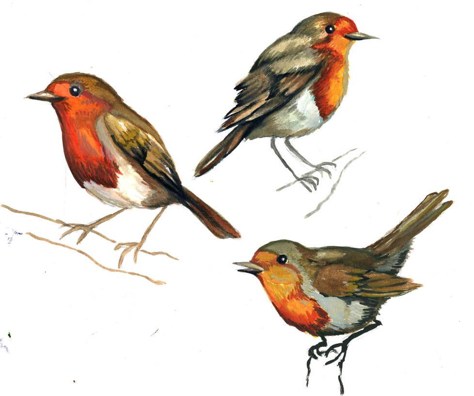 European robin by rAthena