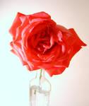 Rose 2 by Itsadequate