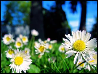 Spring awaits by TinFool