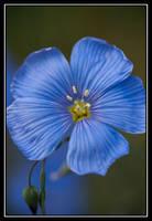 Unoriginal Blue by GildedTiger