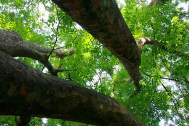 Arboretum 1 by irrlicht71