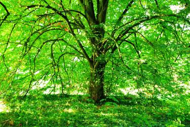 Arboretrum 2 by irrlicht71