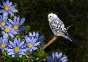 Little Blue Bird by riviera2008