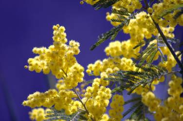 Spring Wonderland by riviera2008