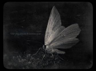 untitled by black-absinth
