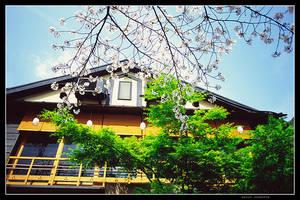 Japanese restaurant and sakura by jasebase