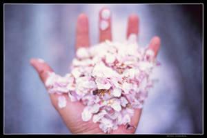 Handful of sakura petals by jasebase