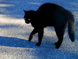 Beware of cat by gonzaleztitorenko