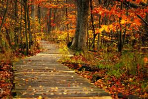 autumn lane II by chirilas