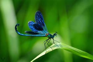 Peadranion Fly by ianvicknair