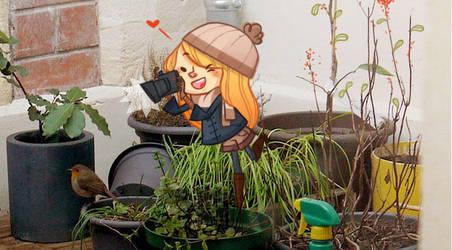 Little robin in the garden by tshipbd