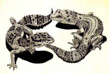 Two Leopard Geckos by Ellygator