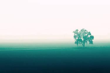 fog 7 by chuckhead