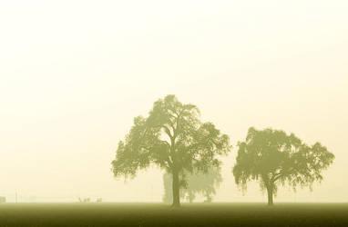 fog 8 by chuckhead