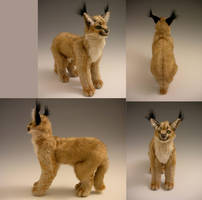 Caracal Plush by WhittyKitty