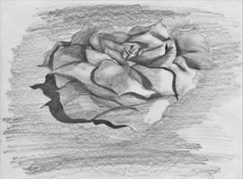 floating rose sketch by JonasLull