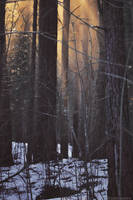 In The Woods There Was A Light by LindaMarieAnson