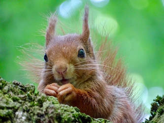 Soft fur smiling by Squirrels2poet2queen