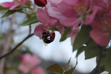 More bees by kotzaal
