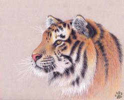 Tiger by CharlyJade