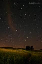 Fireflies by Rykardo