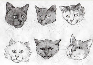 Cat Faces by kitendawili