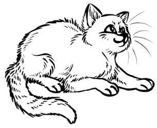 Kitten by kitendawili