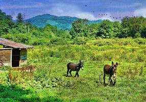 Donkeys by lakeglenmiss