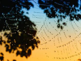 Morning Dew by Casperium
